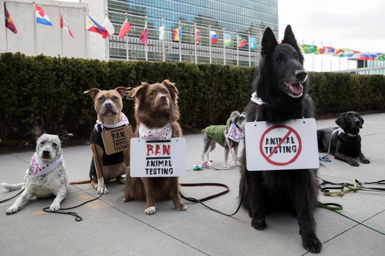 The Body Shop organiza protesto na ONU com a participação de pets em apoio à campanha contra testes em animais